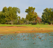 There's more water on the short par-3 17th hole of the Patriot golf course at The Wigwam resort in Litchfield Park, Arizona.