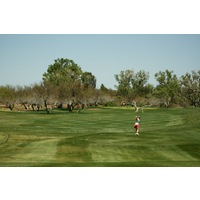 Many of the original holes at Tubac Golf Resort and Spa play through cottonwood trees.