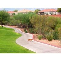 Various wildlife have made The Views G.C. at Oro Valley their home.