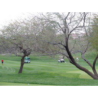 Coyote Lakes Golf Club - Phoenix Scottsdale - Tree shot