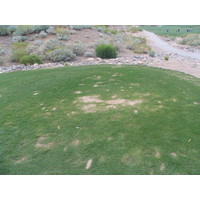 Coyote Lakes Golf Club - Phoenix Scottsdale - Hole No. 2 tee box divots