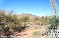 Desert Forest Golf Club